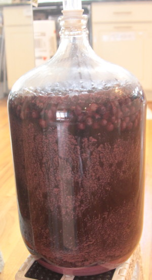 Blueberries floating in a carboy